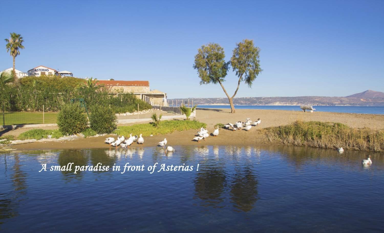 Asterias hotel and studios (4)